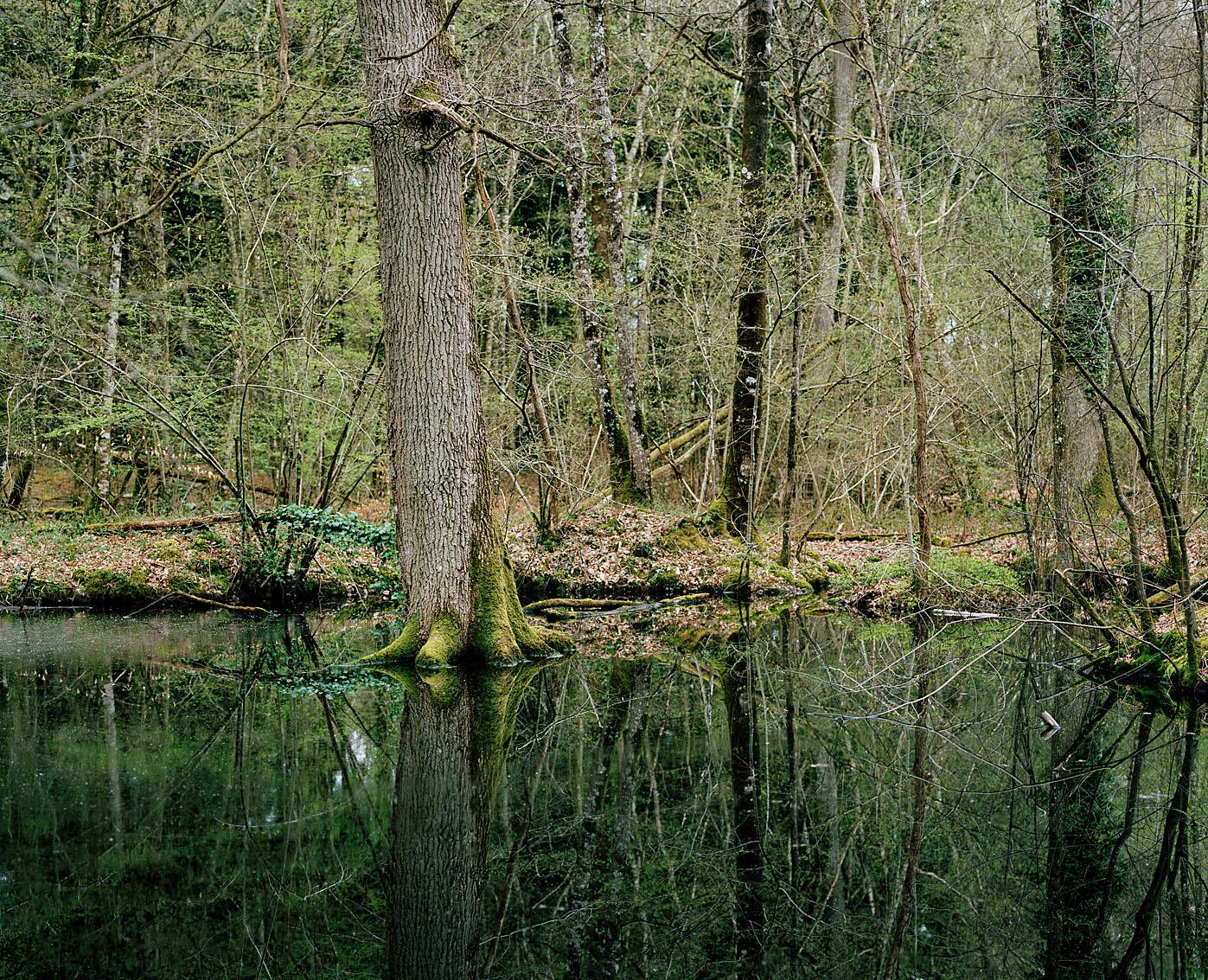 Forêt de la Guerche, Ille et Vilaine.