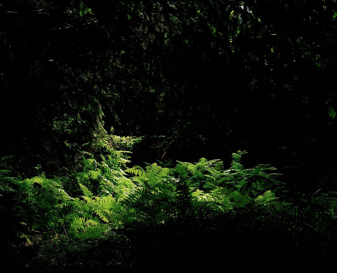 Forêt domaniale de Monfort sur Risle, Eure.