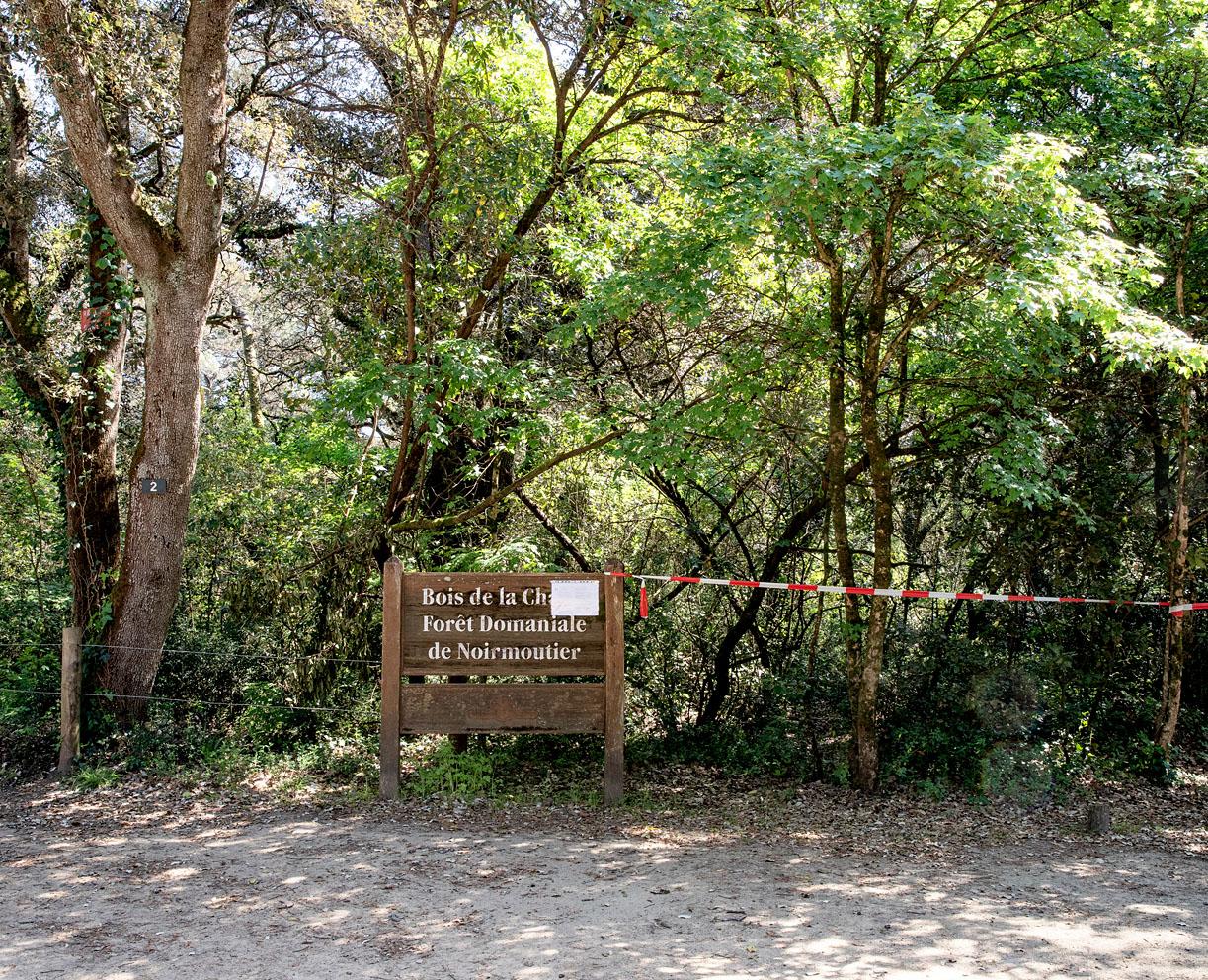 Samedi 11 avril 2020, Bois de la Chaise, île de Noirmoutier.