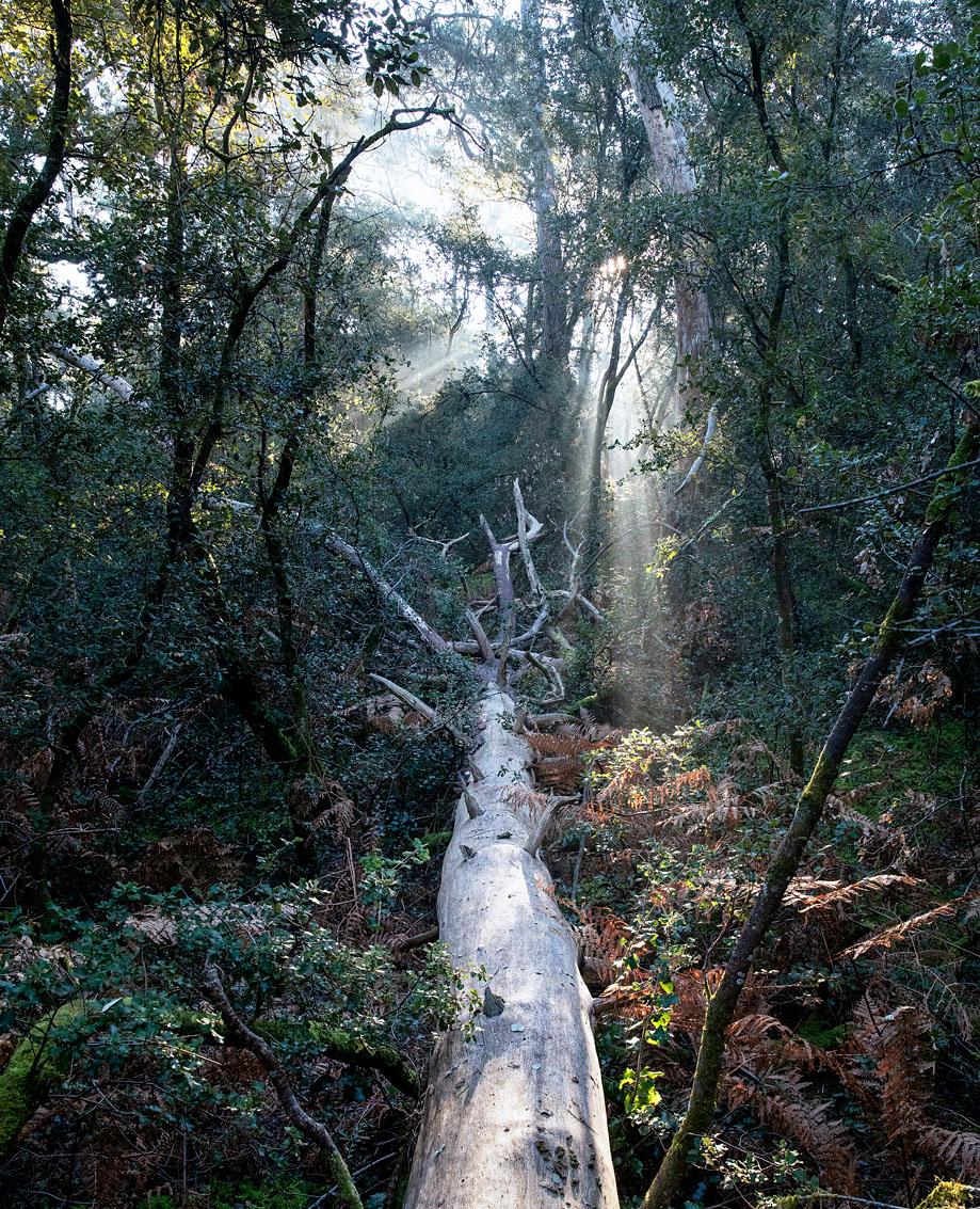 Forêt du Veillon - Talmont Saint Hilaire - Vendée