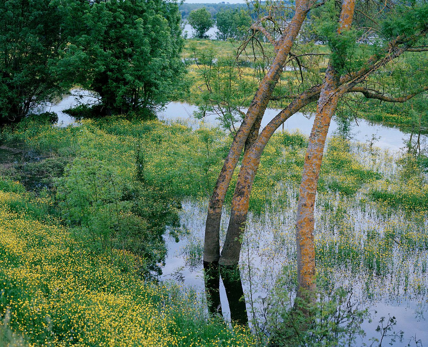 La Loire en crue - Maine et Loire