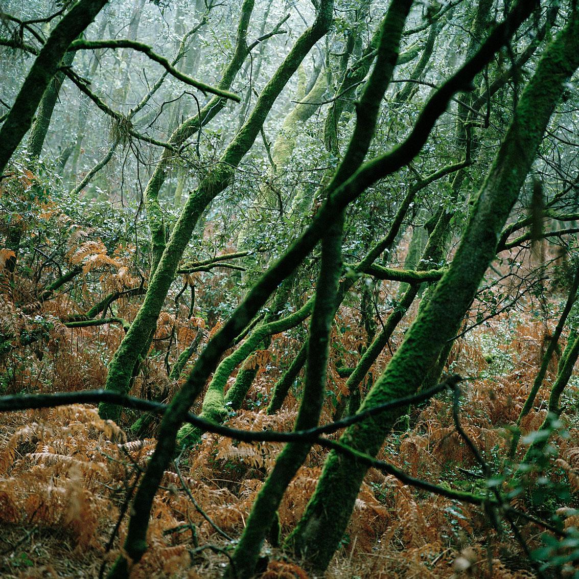 Bois du Veillon - Vendée