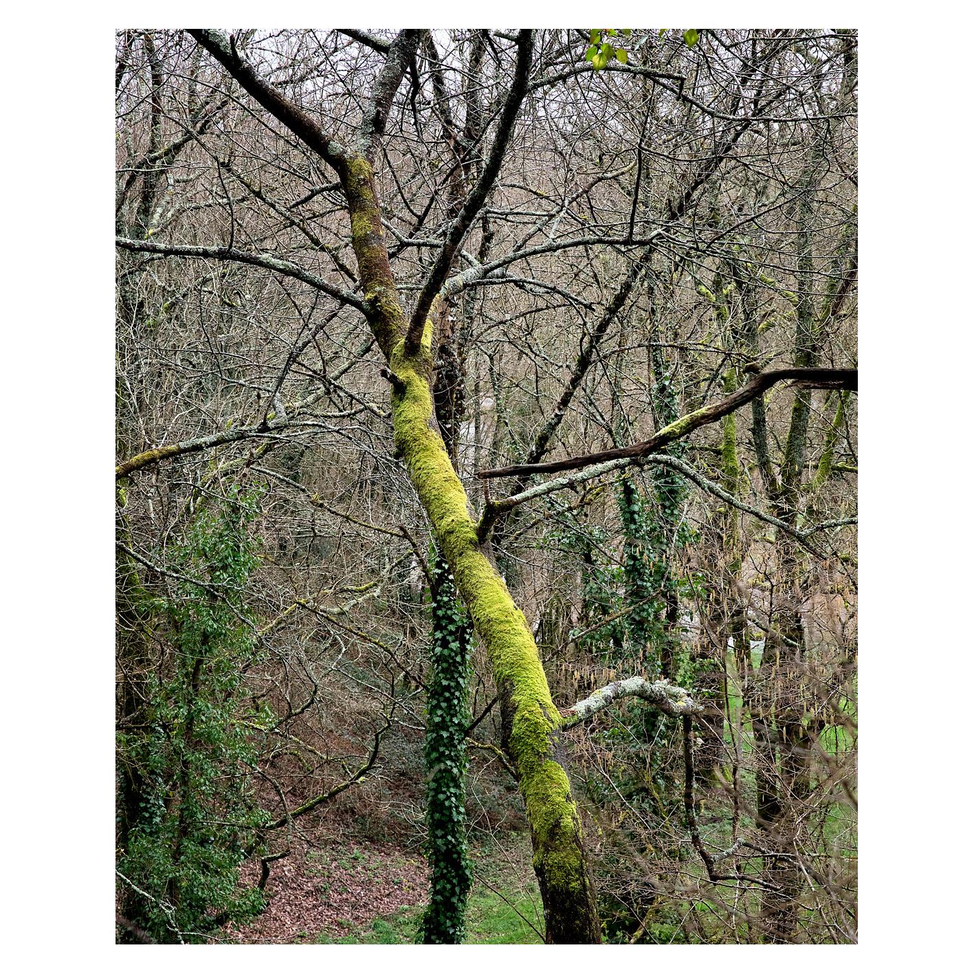 La forêt de Fabrice Hyber au coeur du bocage Vendéen. Le terrain est valonné, en contre bas coule la Doulaye.